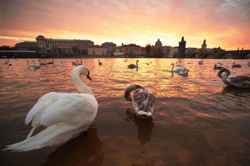 Αγίου Βαλεντίνου στην Πράγα